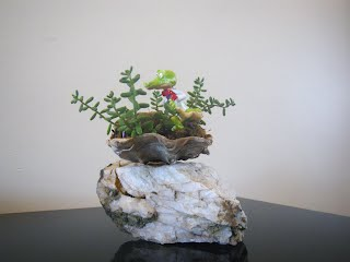 Saikei shell on white rock